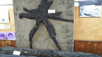 遺物 栗の木.JPG